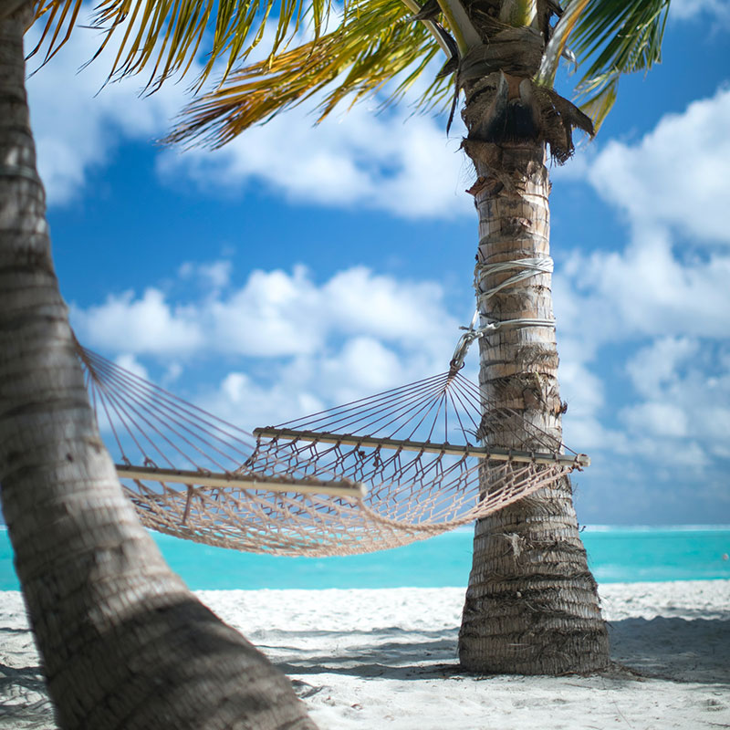 Hammock between two palm trees