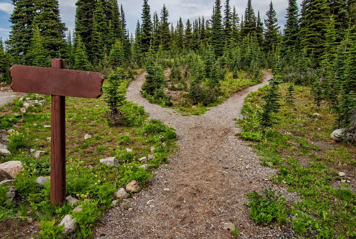 Forest hiking path that splits into two different paths